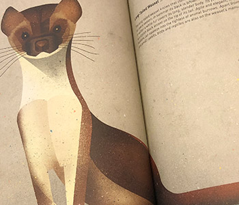 Animals of the North - Weasel Illustration