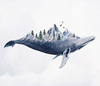 Surreal Whale - Photo Manipulation